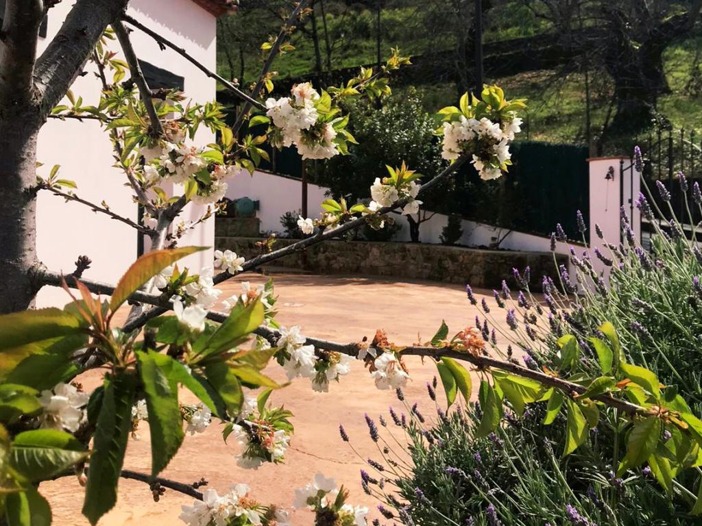 Jardín castaño